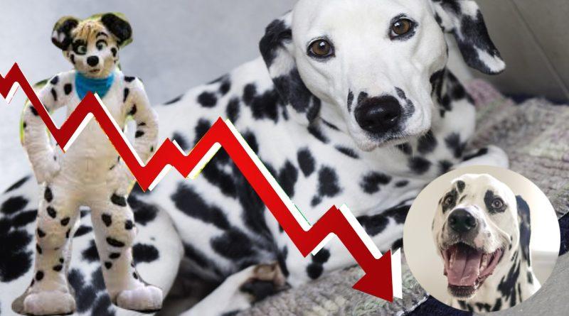 Dalmatiner förlorar status – sälj eller slakta